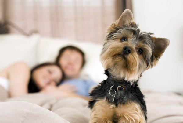 Imagem do Post: Cuidados em ambientes com Pet